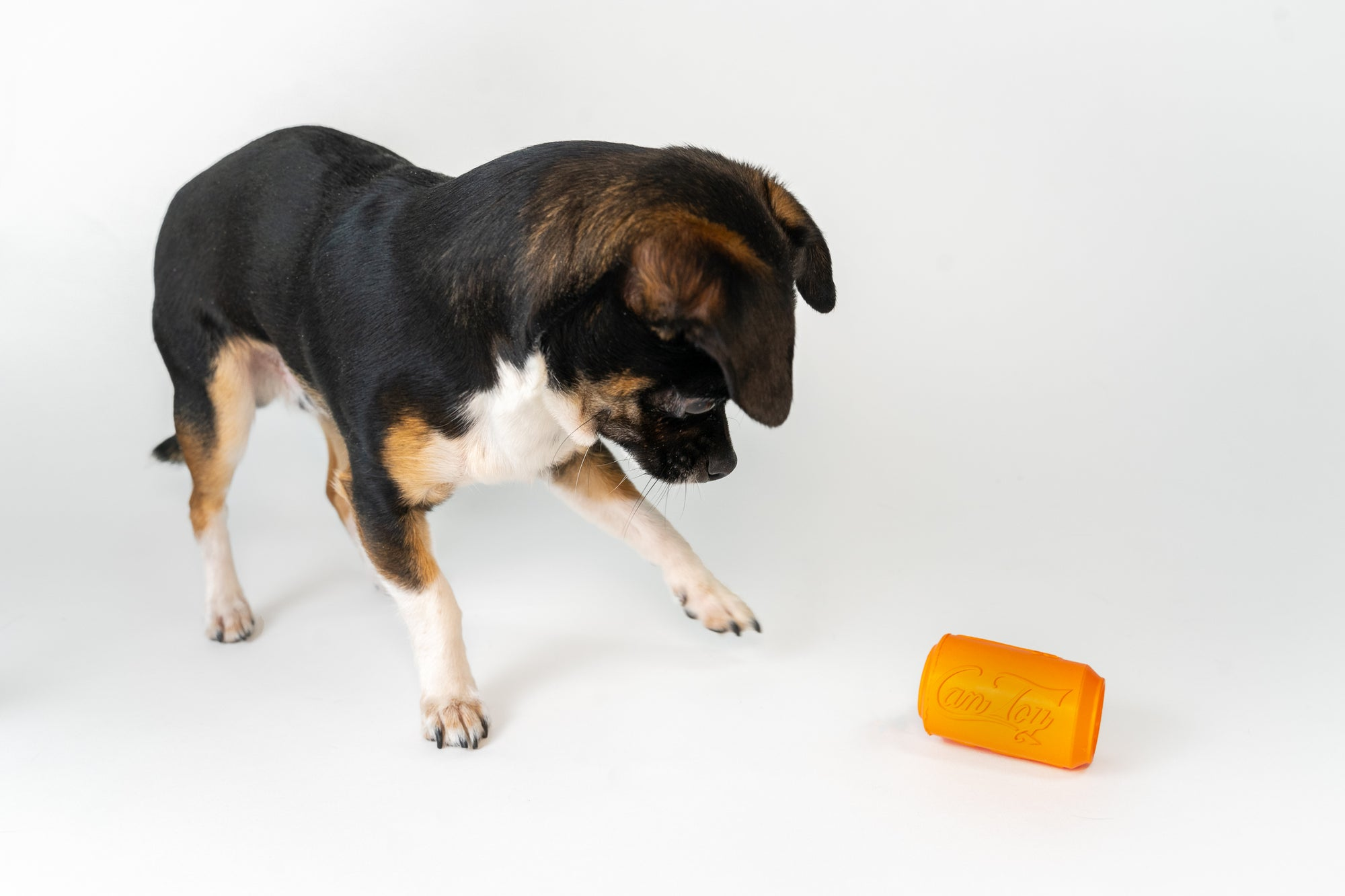 Top 50 Best Eco-Friendly Dog Toys