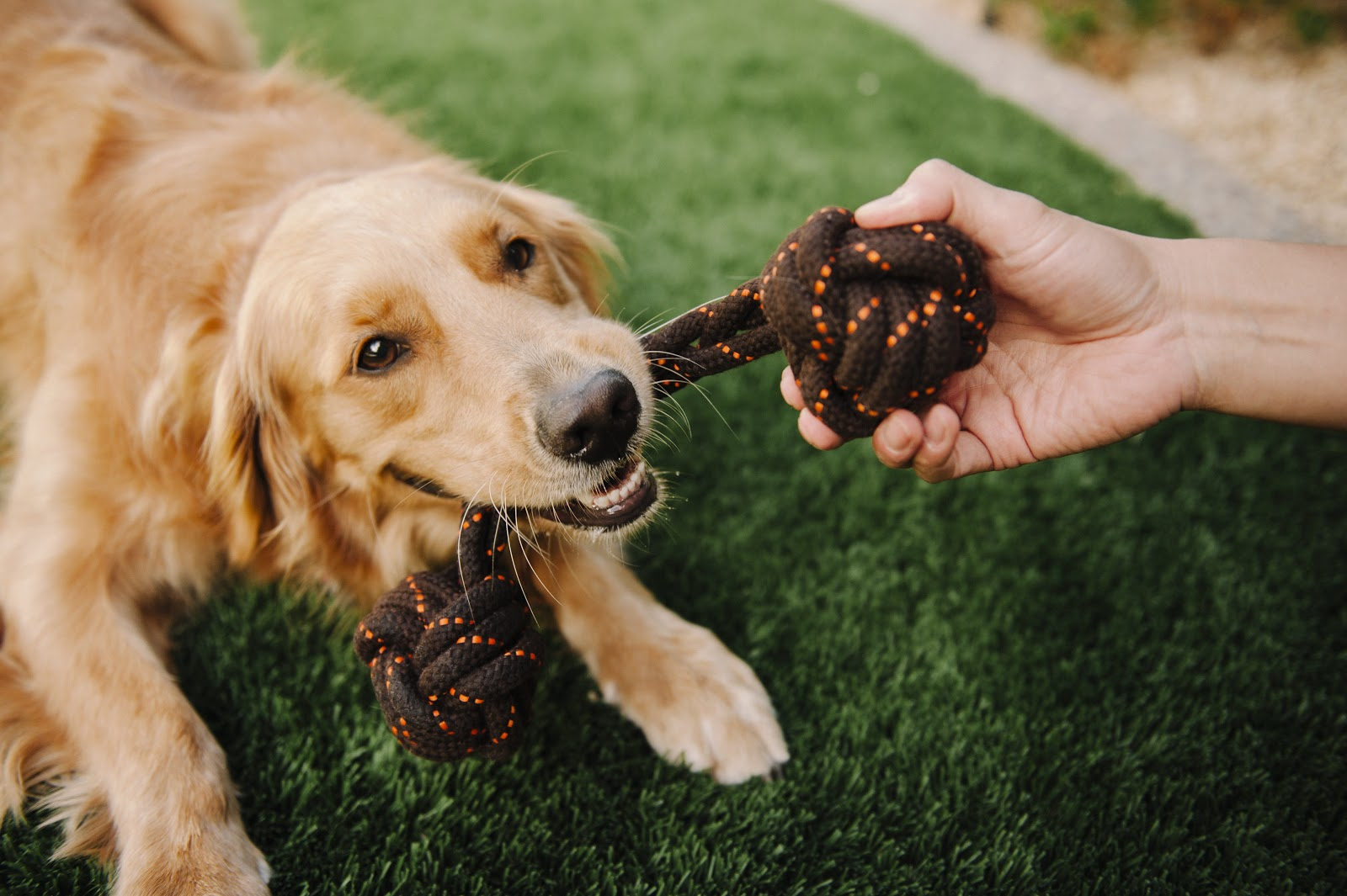 Everything You Need to Know About Eco-Friendly Dog Toys