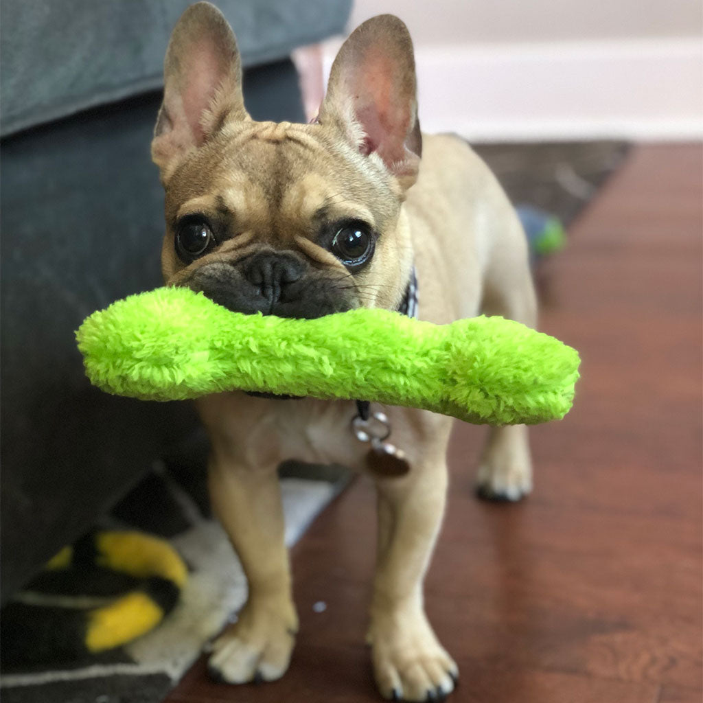 Puppy Playtime: Meet Our CTO, Elton