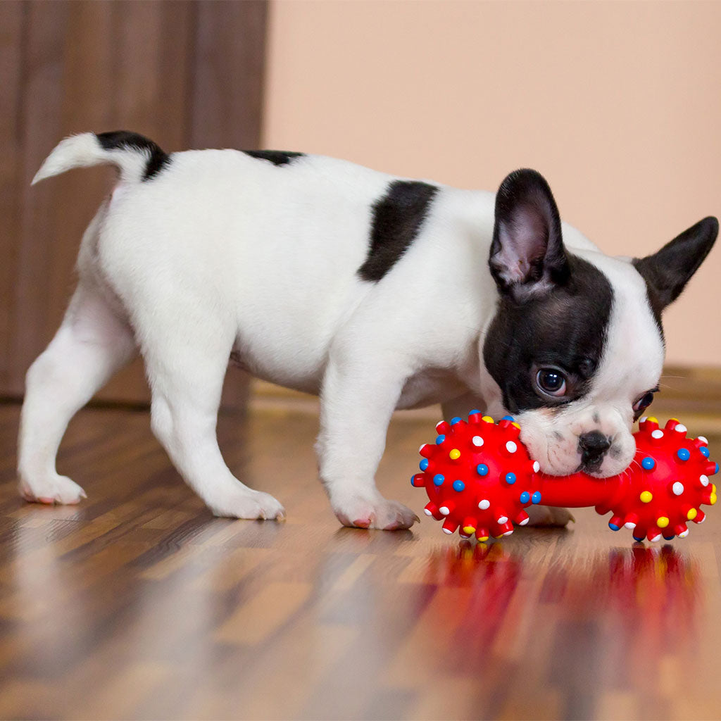 Are Plastics Dog Toys Harming Your Dog's Health?