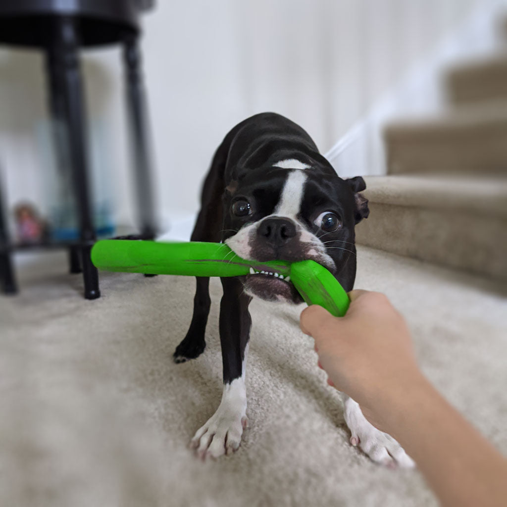 Ditch the Stick: Safe Fetching Toys for Your Dog