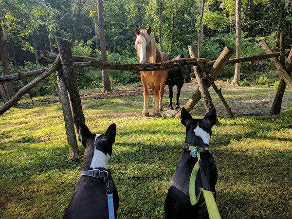 Chopper & Otis: Traveling and making horse friends