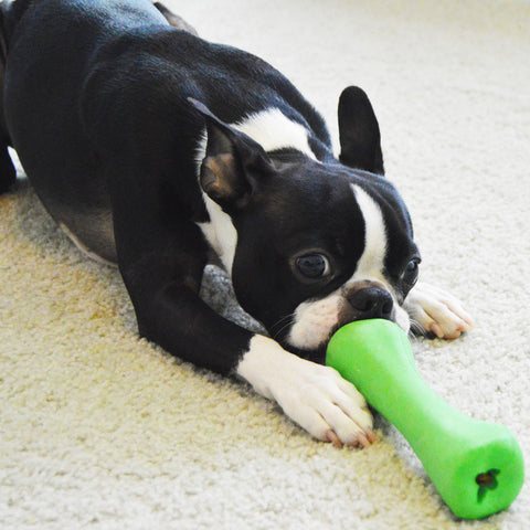 Chopper & Otis: Non-toxic dog toy brands
