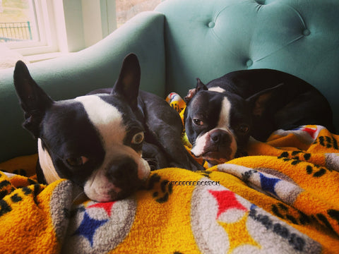 Chopper & Otis | Steeler Blanket
