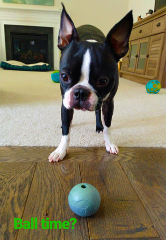 Chopper & Otis | Planet Dog: Dog who loves play ball