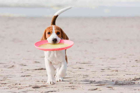 Human Frisbee is not dog friendly