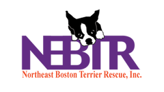 North East Boston Terrier Group