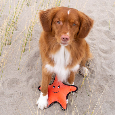 Chopper & Otis: Beco Pets Sindy The Starfish