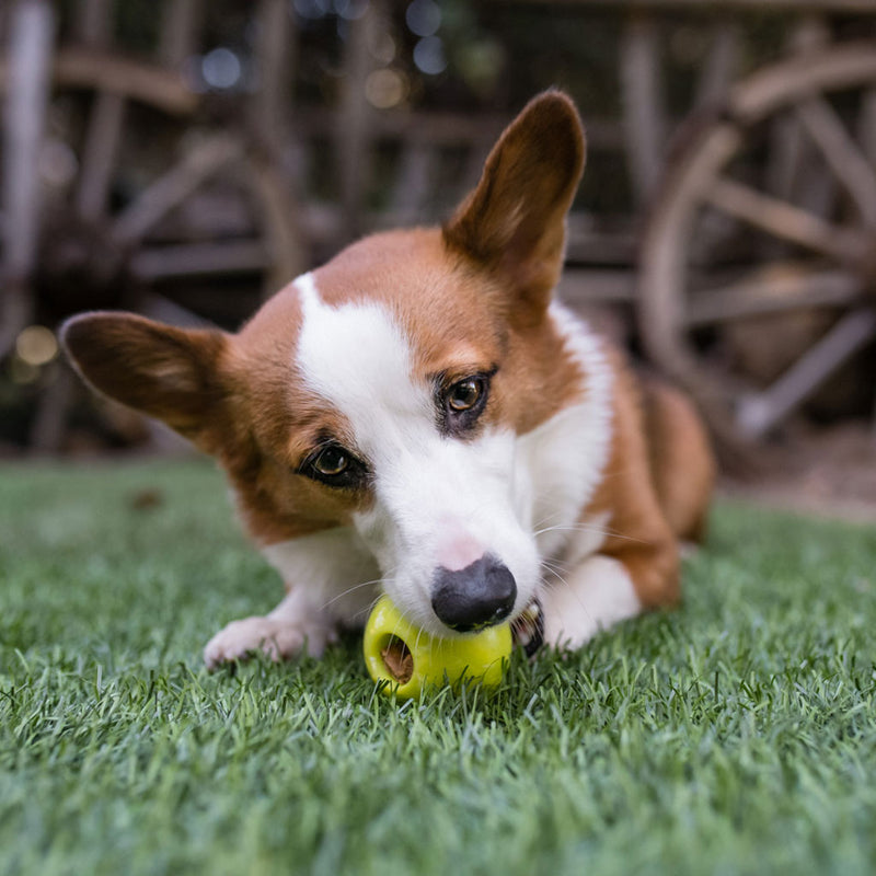 Chopper & Otis: PetPlay: ZoomieRex IncrediBall