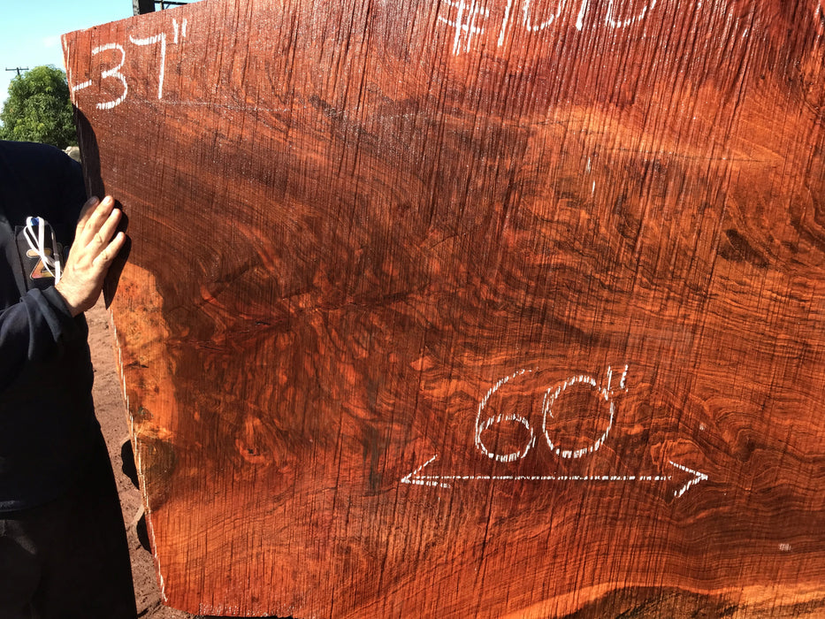 "Jatoba / Brazilian #10107 –2-1/2″ x  32″ to 40""  x   60"" FREE SHIPPING within the Contiguous US. - Big Wood Slabs"
