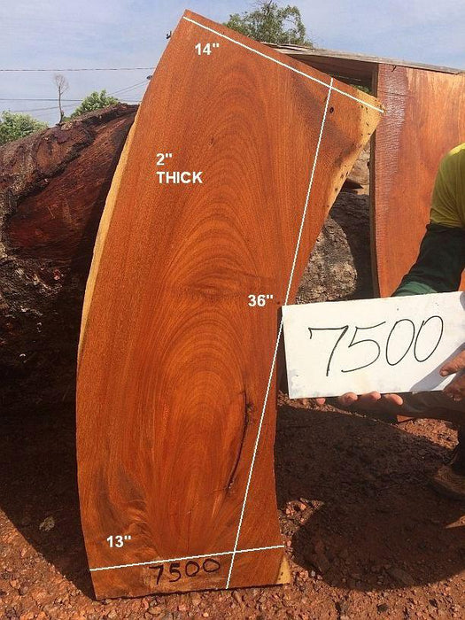 "Angelim Pedra # 7500 - 2"" x 13"" to 14"" x 36"" - Big Wood Slabs"