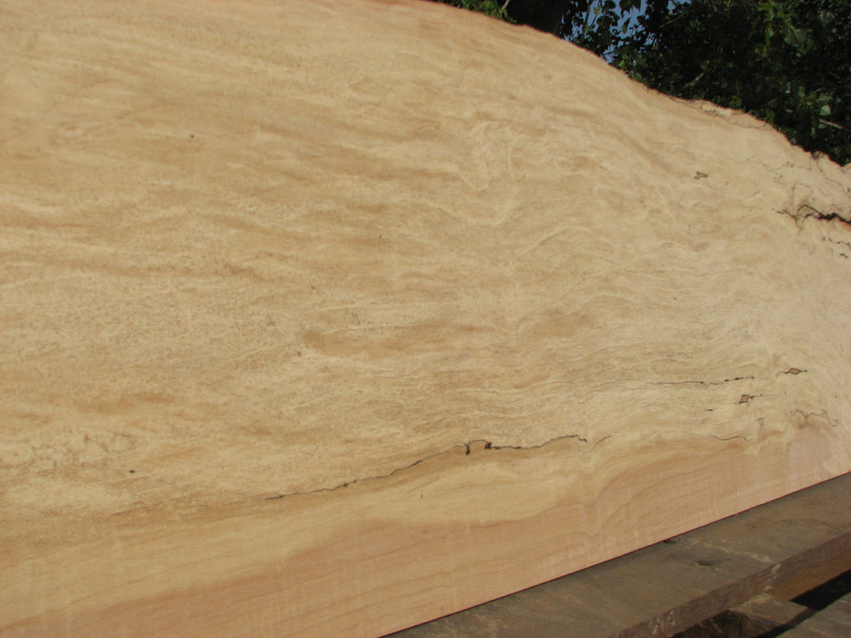 "Maple, Spalted #5053 - 1/2"" x 9"" to 13"" x 52"" FREE SHIPPING within the Contiguous US. - Big Wood Slabs"