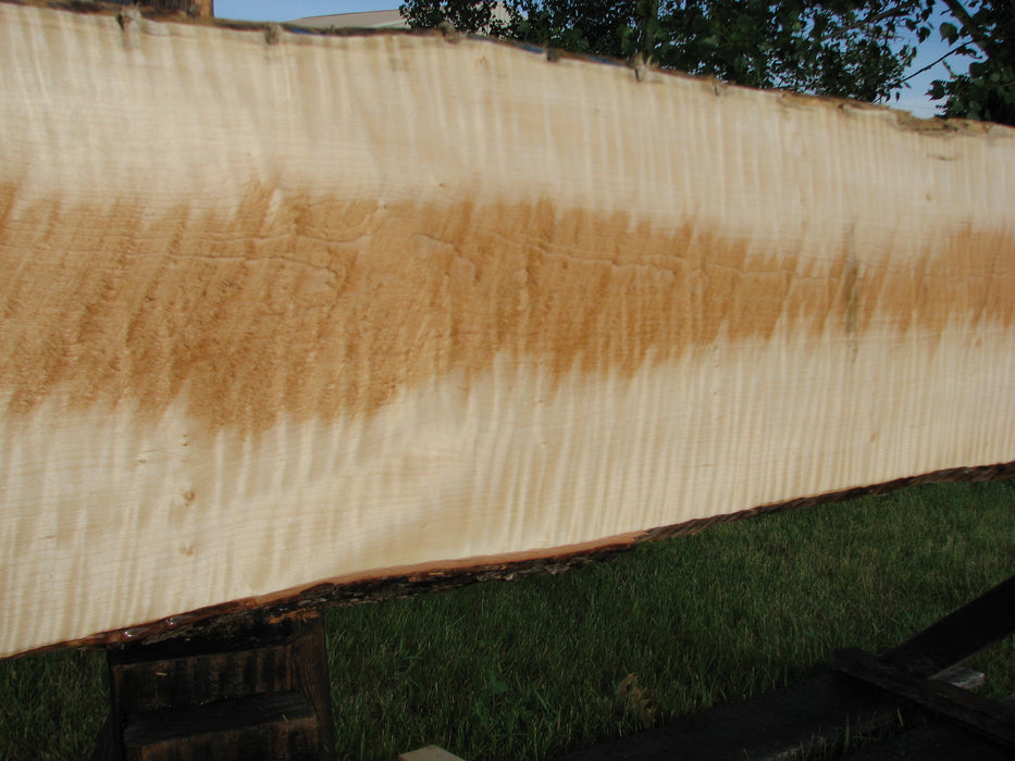 "Maple, Curly #6605(JW) - 15/16"" x 9-1/2"" - 16-1/4"" x 123-7/8"" FREE SHIPPING within the Contiguous US. - Big Wood Slabs"