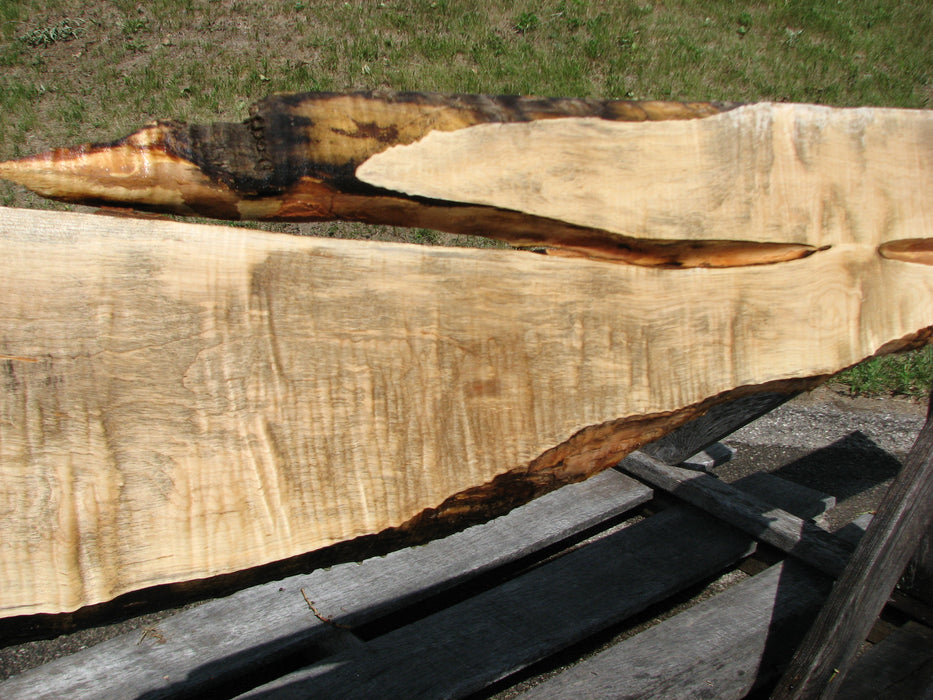 "Maple, Curly #6613(JW) - 15/16"" x 6-3/4"" - 12-1/4"" x 117"" FREE SHIPPING within the Contiguous US. - Big Wood Slabs"