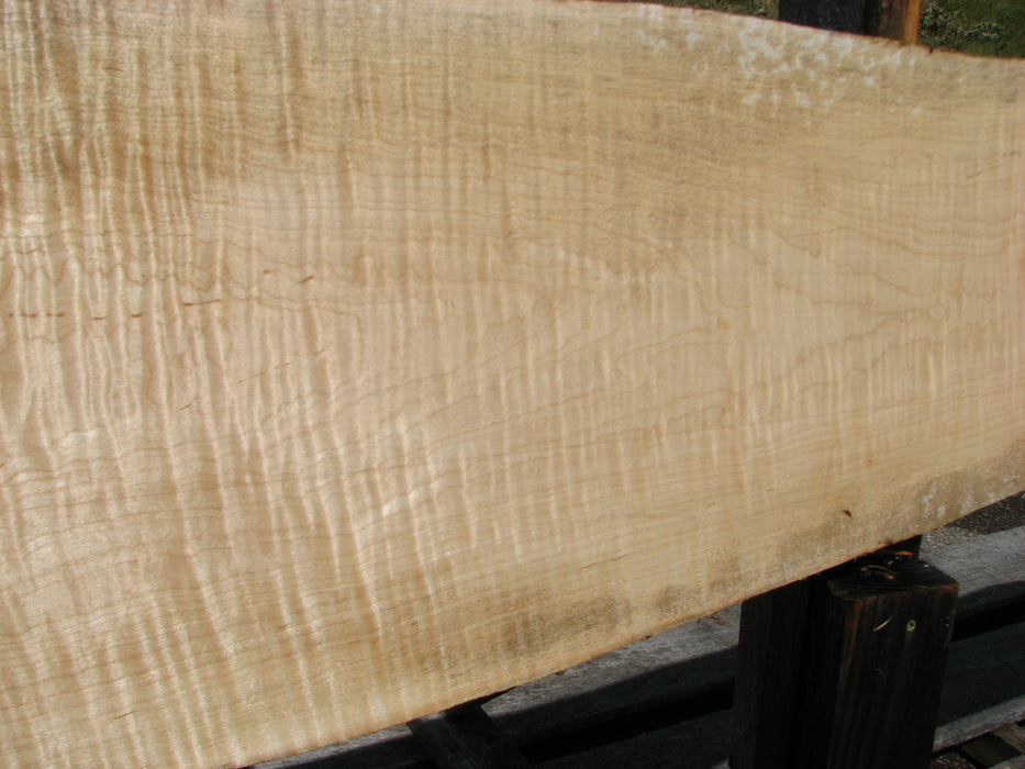 "Maple, Curly #6613(JW) - 15/16"" x 6-3/4"" - 12-1/4"" x 117"""