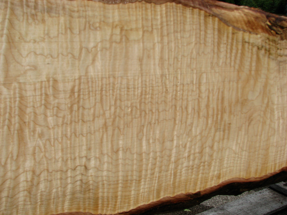 "Maple, Curly #6620(JW) - 1-11/16"" x 6-3/4"" - 12"" x 121"" FREE SHIPPING within the Contiguous US. - Big Wood Slabs"