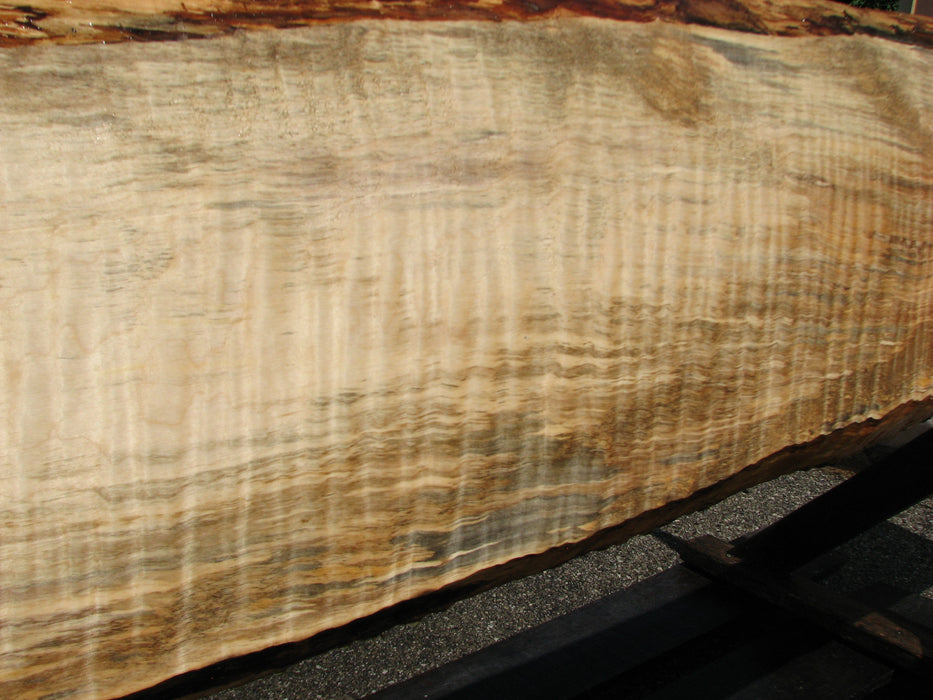"Maple, Curly #6632(JW) - 1-9/16"" x 6"" to 10-1/2"" x 122"""
