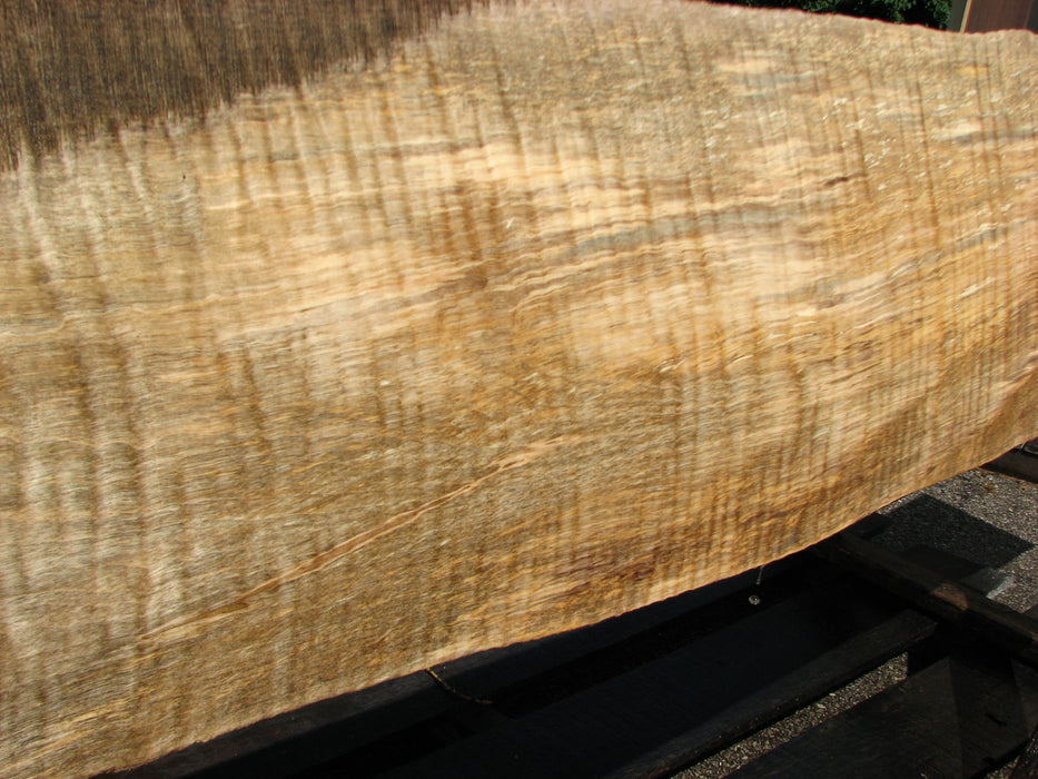 "Maple, Curly #6632(JW) - 1-9/16"" x 6"" to 10-1/2"" x 122"" FREE SHIPPING within the Contiguous US. - Big Wood Slabs"