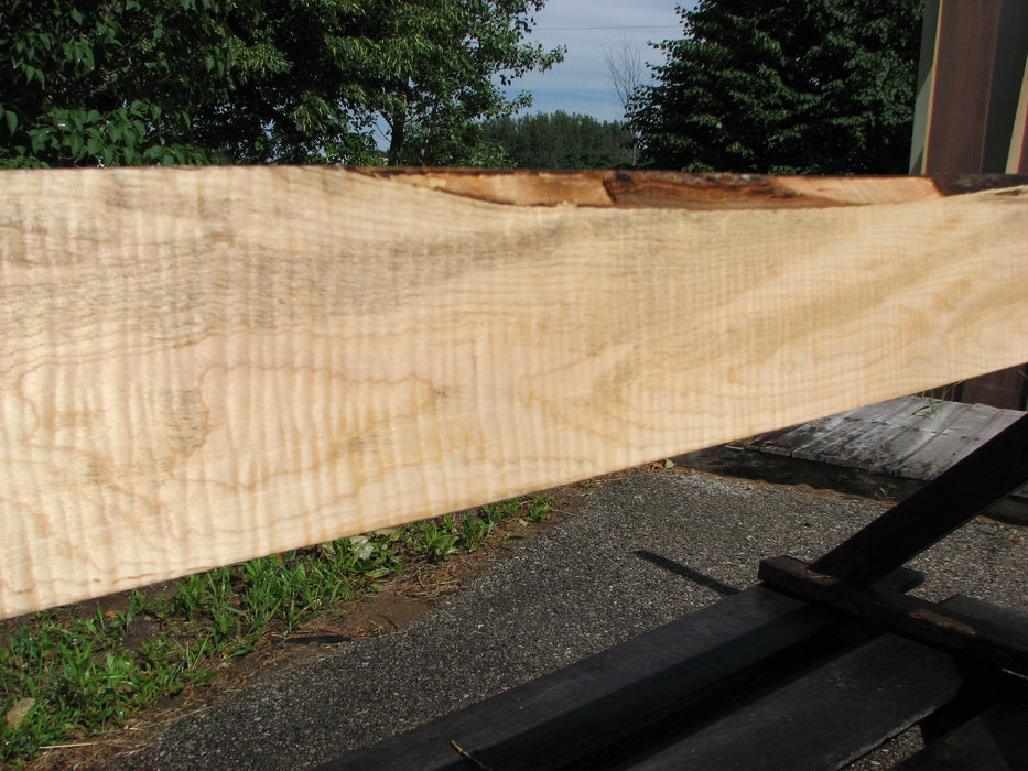"Maple, Curly #6647(JW) - 1-9/16"" x 4-3/4"" to 5-1/2"" x 96"""