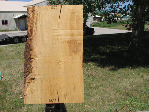 "Box Elder #6671 - 1-3/4"" x 16-1/4"" to 19-1/2"" x 31"" - Big Wood Slabs"