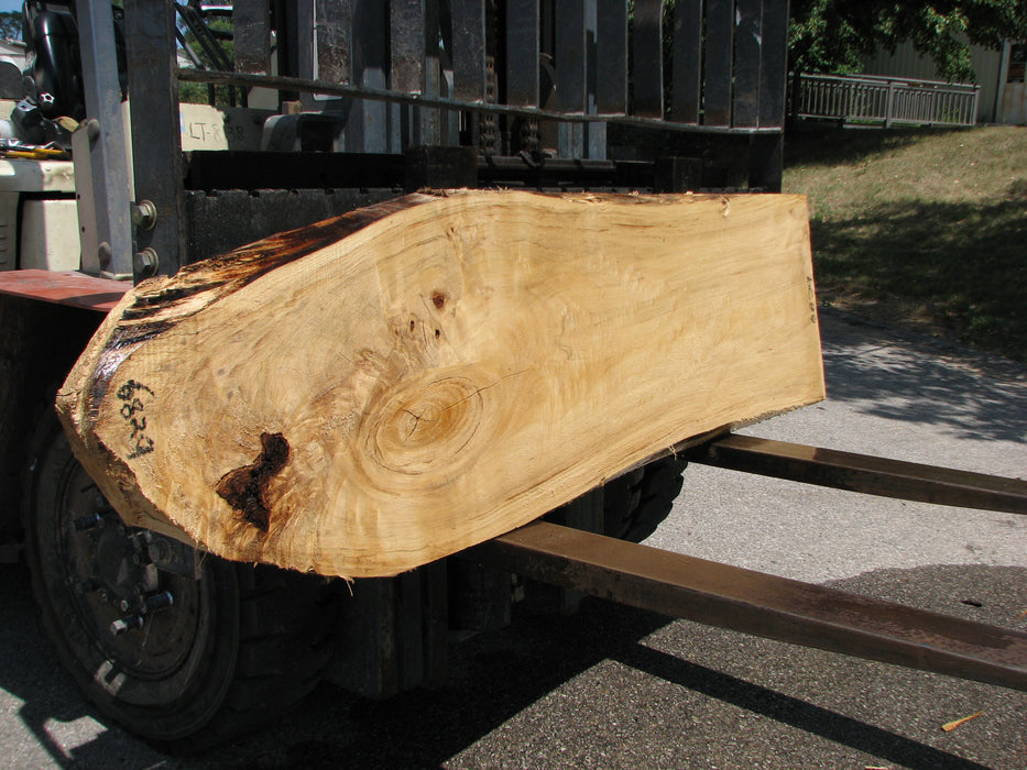 "Cottonwood #6829 - 2-1/4"" x 18-1/4"" to 21"" x 79"" FREE SHIPPING within the Contiguous US. - Big Wood Slabs"
