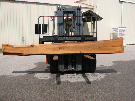 "Red Oak #6867 - 2-1/4"" x 11-1/4"" to 15-1/2"" x 147"" FREE SHIPPING within the Contiguous US. - Big Wood Slabs"