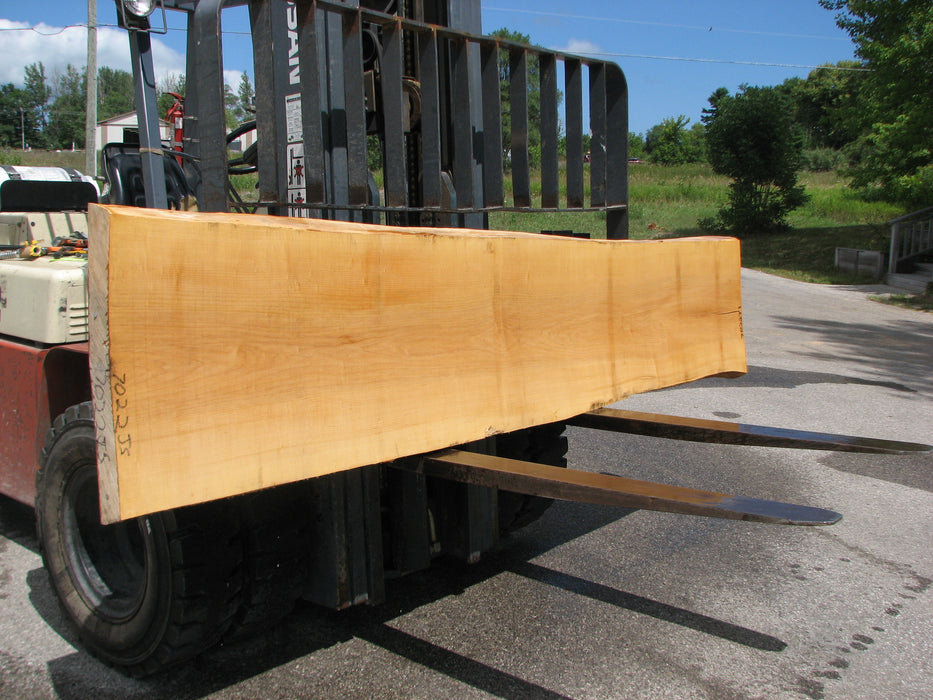 "Maple #7022 (JS) - 3"" x 21"" to 24"" x 119"" FREE SHIPPING within the Contiguous US. - Big Wood Slabs"