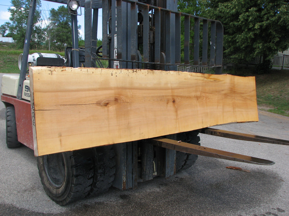 "Maple #7023 (JS) - 2-3/4"" x 23"" to 24"" x 118"" FREE SHIPPING within the Contiguous US. - Big Wood Slabs"