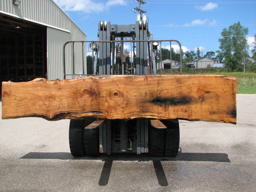 "Butternut, White Walnut #7027 (JS) - 3"" x 20"" to 27"" x 141"" FREE SHIPPING within the Contiguous US. - Big Wood Slabs"