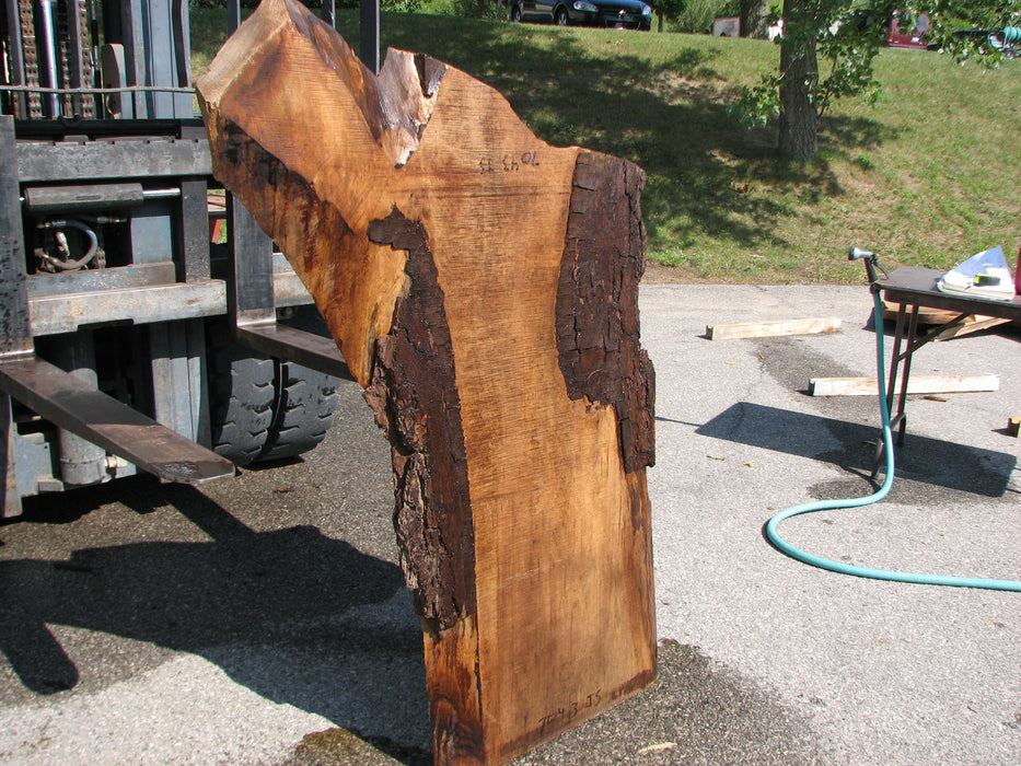 "Walnut, American #7043 (JS) - 2-1/4"" x 11"" to 21"" x 32""-47"" FREE SHIPPING within the Contiguous US. - Big Wood Slabs"