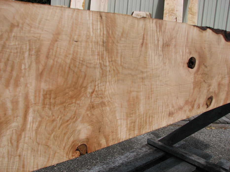"Maple, Curly #7088(JW) - 1-5/16"" x 9-1/4 to 11"" x 101"" FREE SHIPPING within the Contiguous US. - Big Wood Slabs"