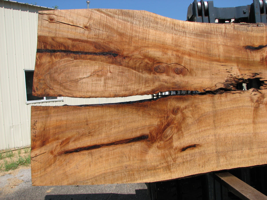 "Maple #7437(TB) - 2-3/4"" x 46"" to 58"" x 162"" FREE SHIPPING within the Contiguous US. - Big Wood Slabs"