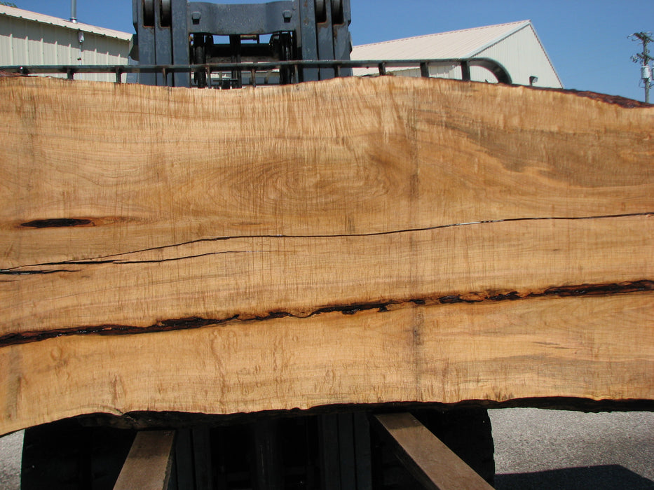 "Maple #7439(TB) - 2-1/2"" x 42"" to 58"" (A-11""-32"", B-15""-33"") x 162"" FREE SHIPPING within the Contiguous US. - Big Wood Slabs"