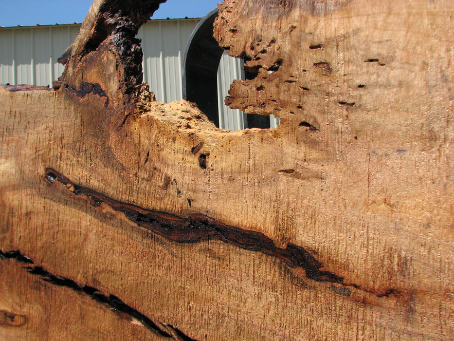 "Maple #7441(TB) - 2-1/2"" x 36"" to 51"" x 165"" FREE SHIPPING within the Contiguous US. - Big Wood Slabs"