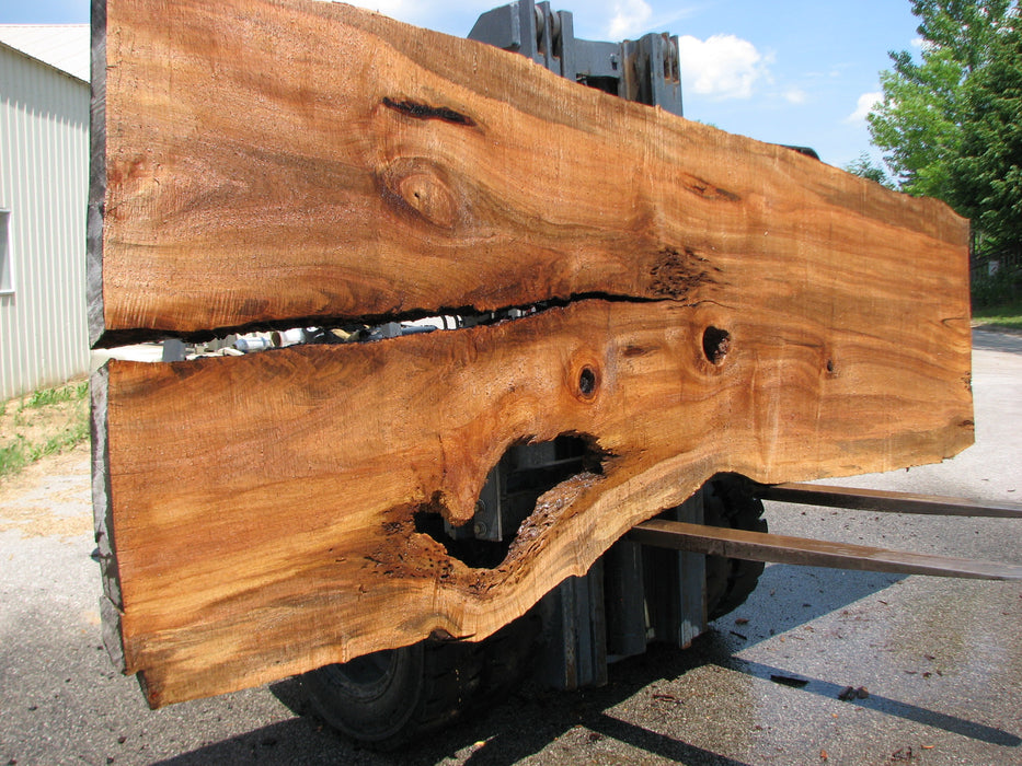 "Maple #7442(TB) - 2-1/2"" x 38"" to 59"" x 164"" FREE SHIPPING within the Contiguous US. - Big Wood Slabs"