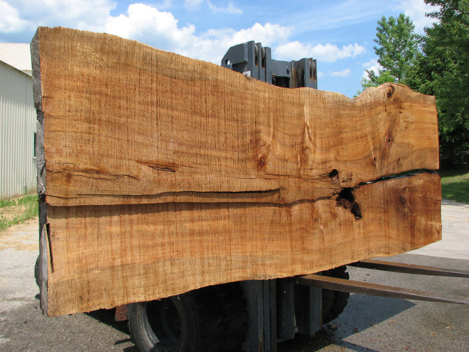 "Maple #7443(TB) - 2-1/2"" x 47"" to 57"" (A-24""-31"", B-22""-28"") x 164"" FREE SHIPPING within the Contiguous US. - Big Wood Slabs"