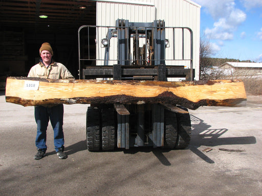 "Spruce #5318- 3"" x 6"" to 12"" x 149"" FREE SHIPPING within the Contiguous US. - Big Wood Slabs"