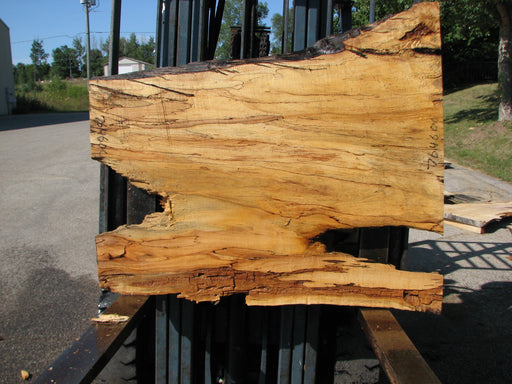 "Maple, Spalted #7646(ROC) - 2-1/2"" x 30"" to 41"" x 46"" FREE SHIPPING within the Contiguous US. - Big Wood Slabs"