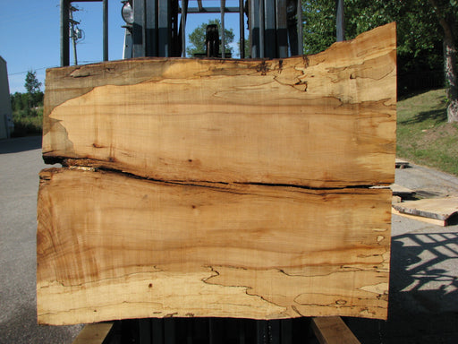 "Maple, Spalted #7651(ROC) - 2-3/8"" x 36"" to 38"" x 50"" FREE SHIPPING within the Contiguous US. - Big Wood Slabs"