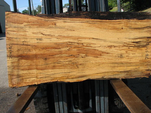 "Maple, Spalted #7654(ROC) - 2-3/8"" x 22"" to 30"" x 56"" FREE SHIPPING within the Contiguous US. - Big Wood Slabs"