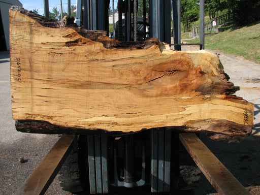 "Maple, Spalted #7656(ROC) - 2-1/4"" x 9"" step to 19"" to 28"" x 63"" FREE SHIPPING within the Contiguous US. - Big Wood Slabs"