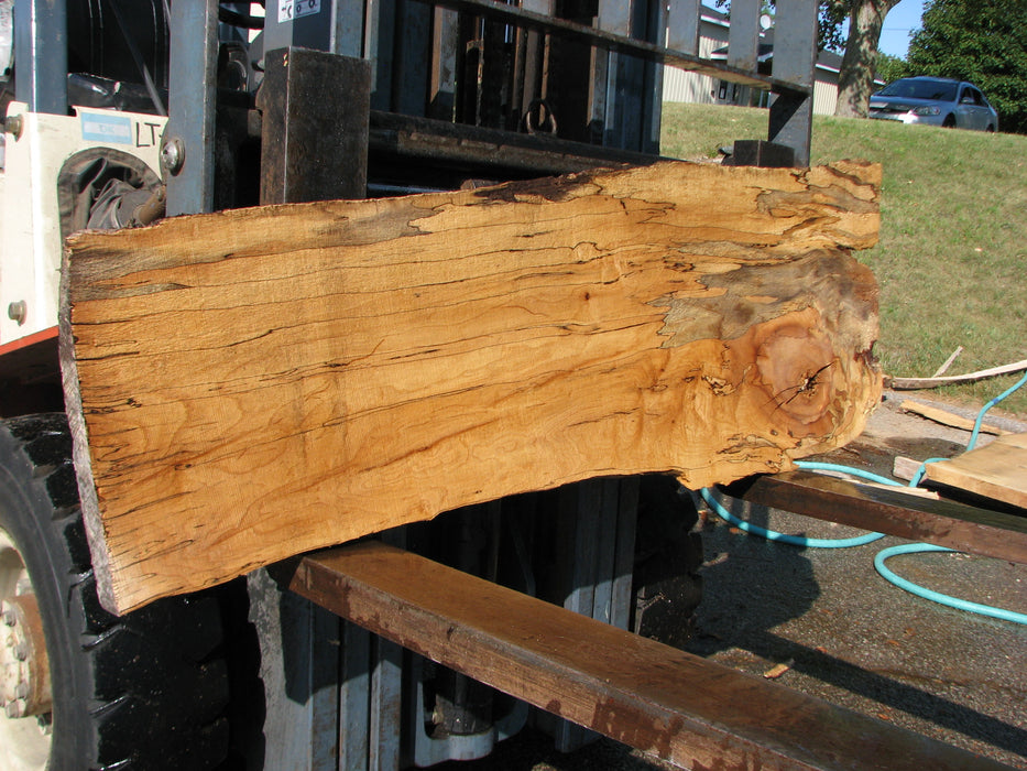 "Maple, Spalted #7657(ROC) - 1-1/4"" x 11"" to 17"" x 54"" FREE SHIPPING within the Contiguous US. - Big Wood Slabs"