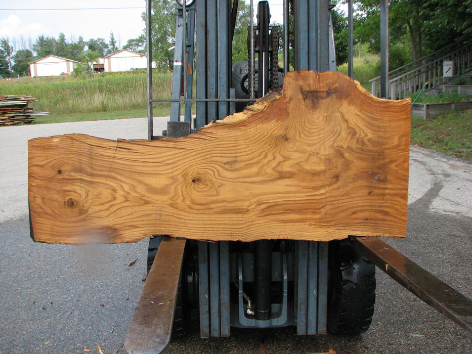 "Oak, White #7666(ROC) - 2-1/2"" x 7""- 24"" x 65"" FREE SHIPPING within the Contiguous US. - Big Wood Slabs"