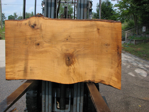 "Oak, White #7669(ROC) - 2-1/2"" x 31""- 36"" x 61"" FREE SHIPPING within the Contiguous US. - Big Wood Slabs"