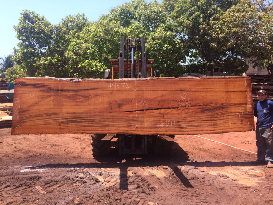 "Angelim Pedra # 9372 - 2-5/8"" x 49"" to 50"" x 211"" FREE SHIPPING within the Contiguous US. - Big Wood Slabs"