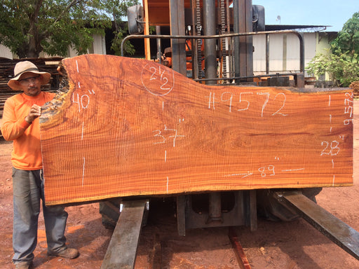 "PRESIDENT'S SALE ITEM - Cumaru / Brazilian Teak #9572 - 2-1/2"" X 28"" to 40"" X 89"" FREE SHIPPING within the Contiguous US. - Big Wood Slabs"
