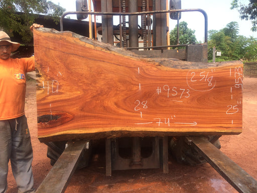 "PRESIDENT'S SALE ITEM - Cumaru / Brazilian Teak #9573 - 2-5/8"" X 25"" to 40"" X 74"" FREE SHIPPING within the Contiguous US. - Big Wood Slabs"