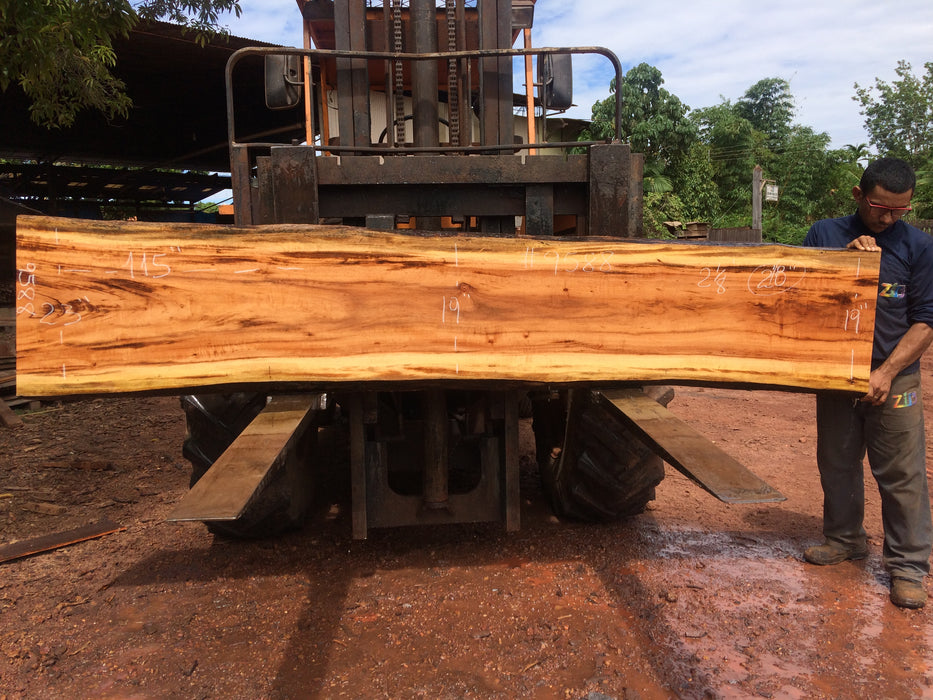 "Goncalo Alves / Tigerwood #9588 - 2-1/8"" x 19"" to 23"" x 115"" FREE SHIPPING within the Contiguous US. - Big Wood Slabs"