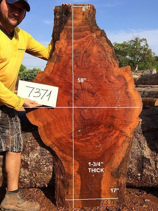 "Cumaru / Brazilian Teak  #7371 - 2-3/4"" X 17"" TO 35"" X 59"" FREE SHIPPING within the Contiguous US. - Big Wood Slabs"