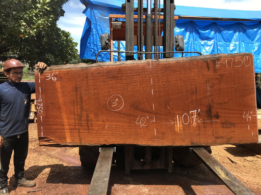 "Tatajuba #9750 - 2-7/8"" x 36"" to 52"" x 205"" FREE SHIPPING within the Contiguous US. - Big Wood Slabs"